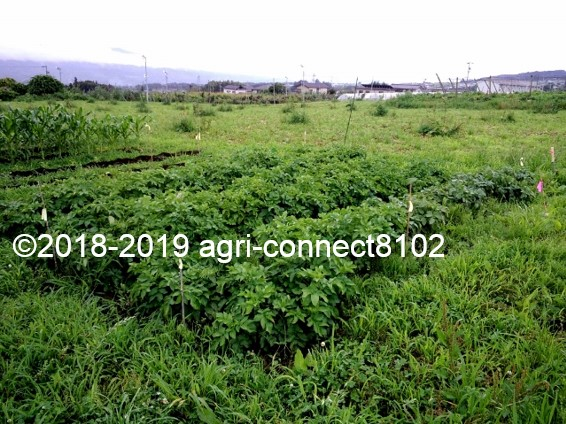 f:id:agri-connect:20190722222415j:plain