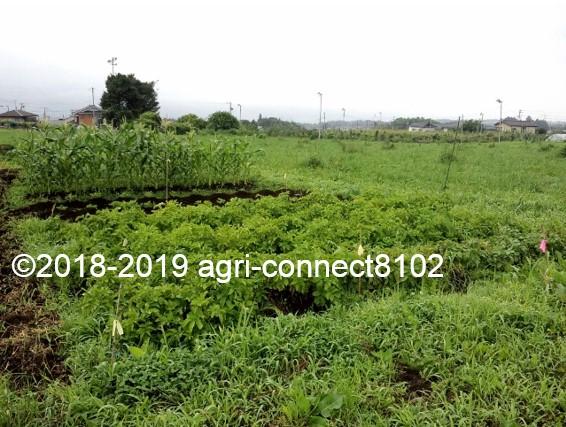 f:id:agri-connect:20190722223029j:plain