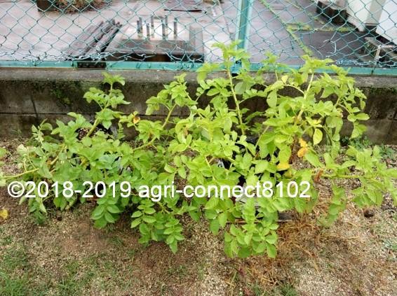 f:id:agri-connect:20190722223455j:plain
