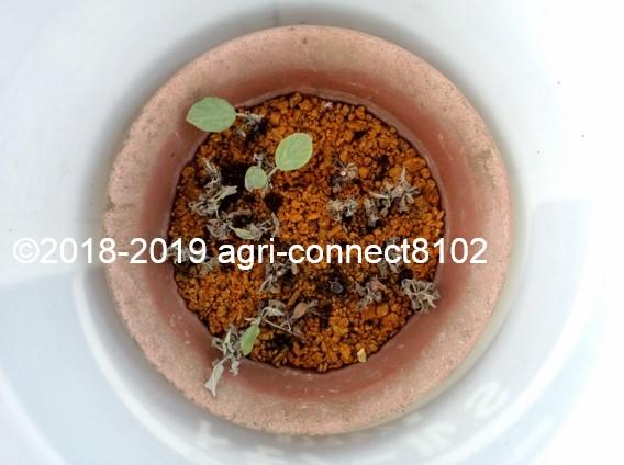 f:id:agri-connect:20190729214922j:plain