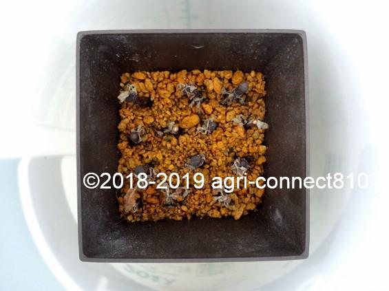 f:id:agri-connect:20190729214934j:plain