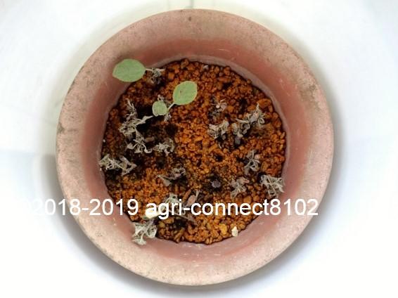f:id:agri-connect:20190729215029j:plain