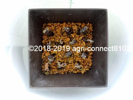 f:id:agri-connect:20190729215038j:plain