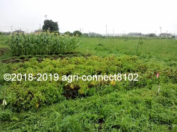 f:id:agri-connect:20190730224937j:plain