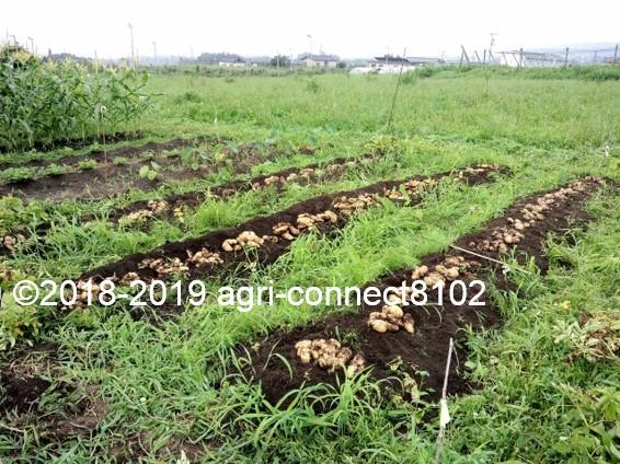 f:id:agri-connect:20190730224955j:plain