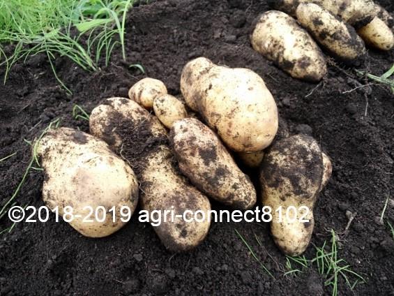 f:id:agri-connect:20190730225157j:plain