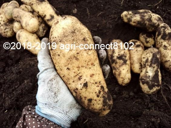 f:id:agri-connect:20190730225213j:plain