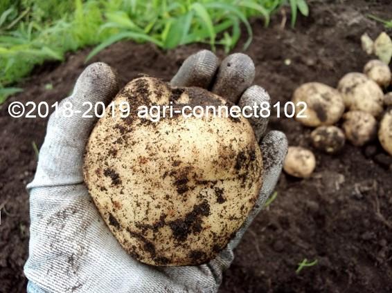 f:id:agri-connect:20190730225348j:plain