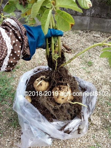 f:id:agri-connect:20190730231141j:plain