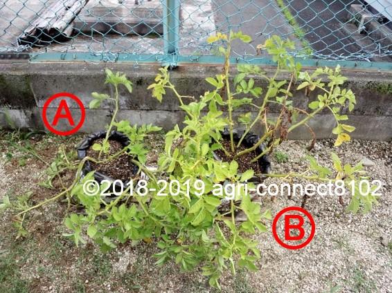 f:id:agri-connect:20190730231256j:plain