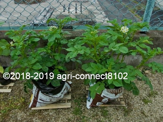 f:id:agri-connect:20190731000857j:plain