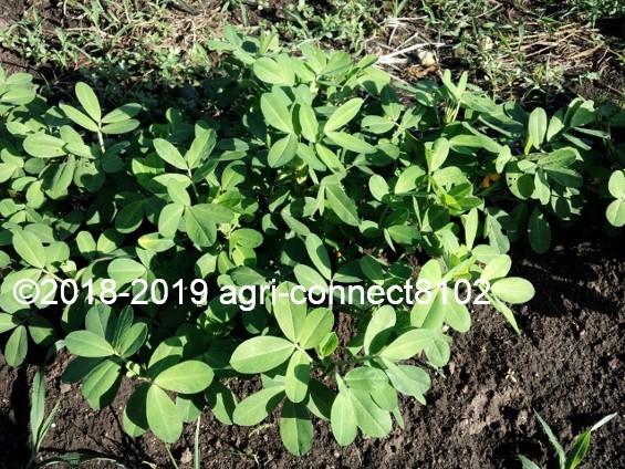 f:id:agri-connect:20190807221932j:plain