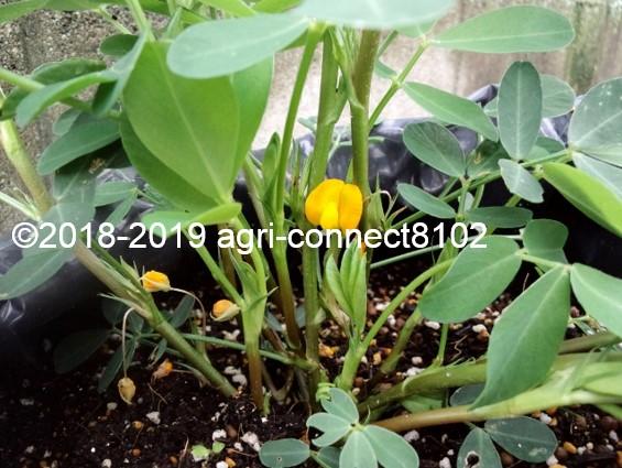 f:id:agri-connect:20190807222755j:plain