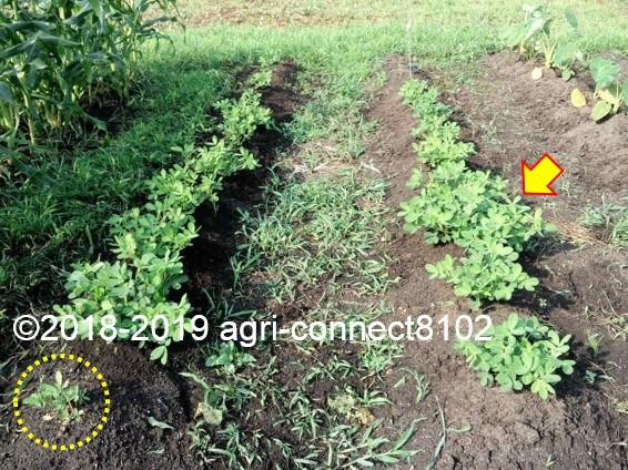 f:id:agri-connect:20190807224946j:plain