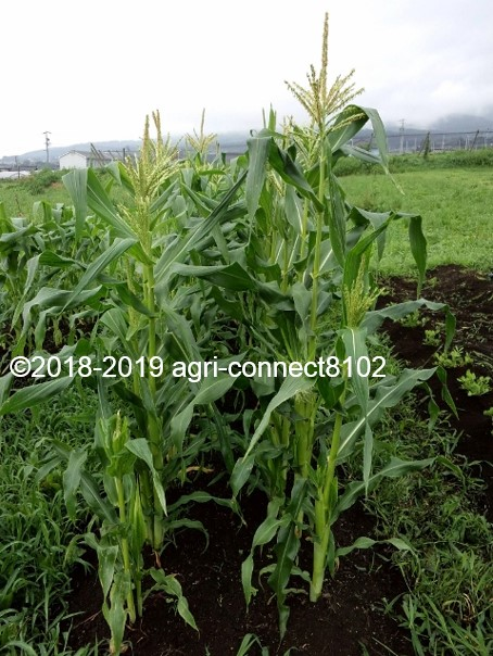 f:id:agri-connect:20190811002131j:plain