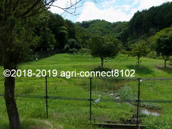 f:id:agri-connect:20190816214928j:plain