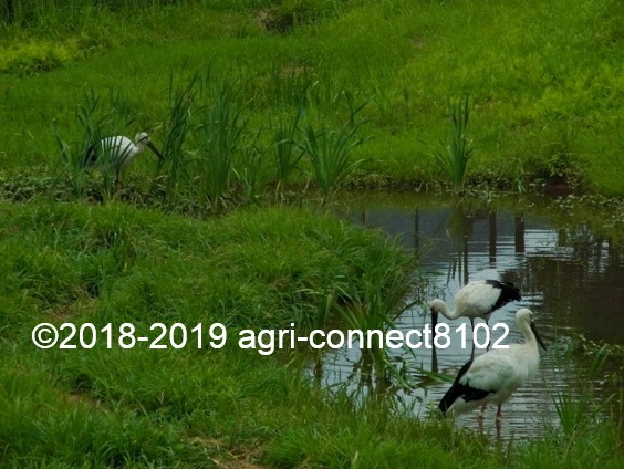 f:id:agri-connect:20190816214938j:plain