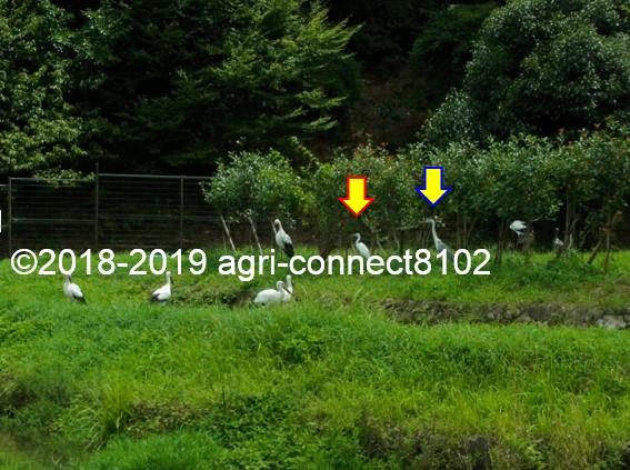 f:id:agri-connect:20190816214958j:plain