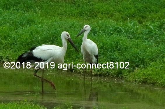 f:id:agri-connect:20190816224406j:plain