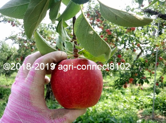 f:id:agri-connect:20190819230232j:plain
