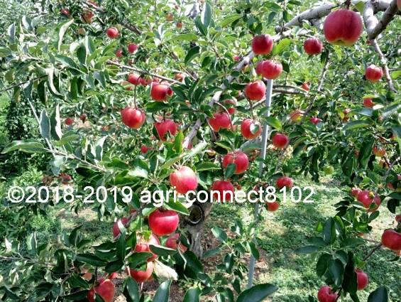f:id:agri-connect:20190819230301j:plain