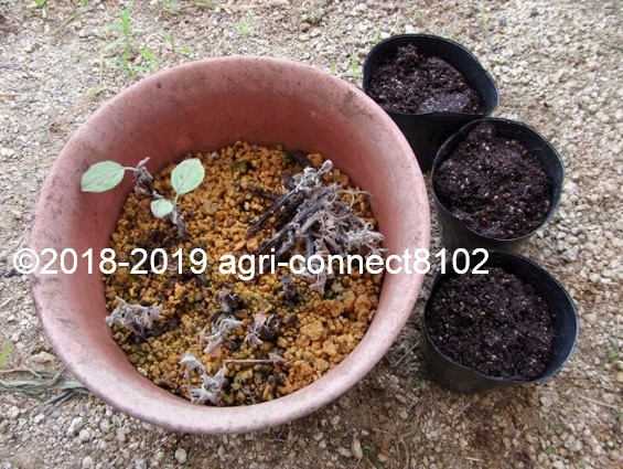 f:id:agri-connect:20190822230355j:plain