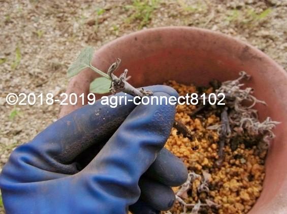 f:id:agri-connect:20190822230458j:plain