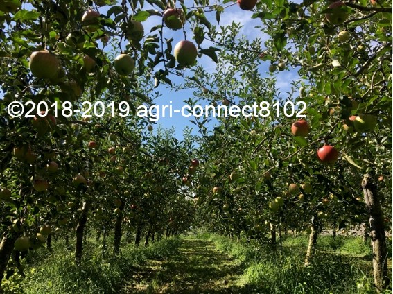 f:id:agri-connect:20190826215047j:plain
