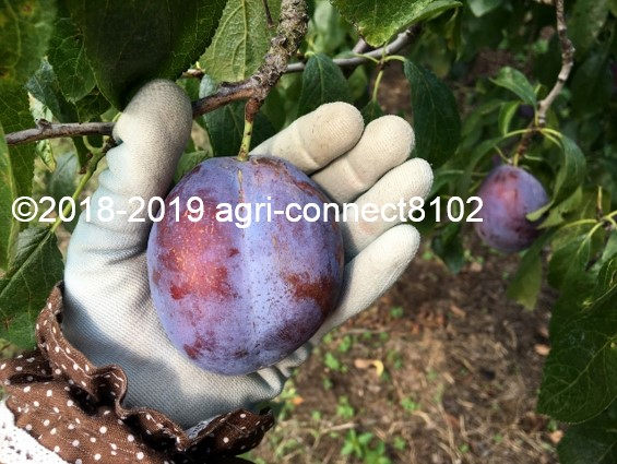 f:id:agri-connect:20190905213005j:plain