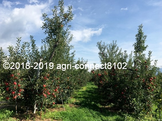 f:id:agri-connect:20190905213127j:plain