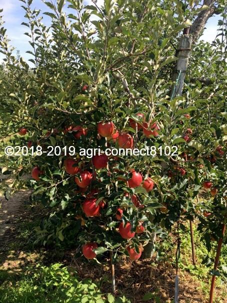f:id:agri-connect:20190905213141j:plain