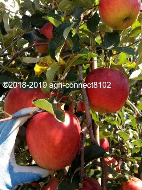f:id:agri-connect:20190905213200j:plain