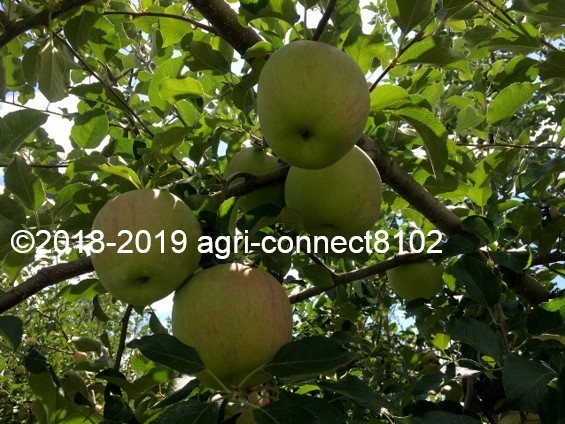 f:id:agri-connect:20190905213516j:plain