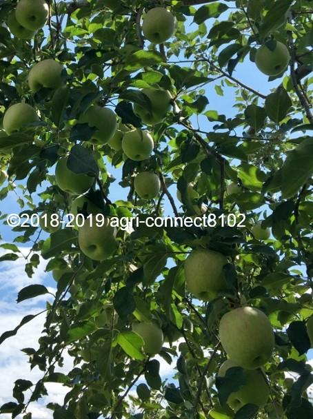 f:id:agri-connect:20190905213542j:plain