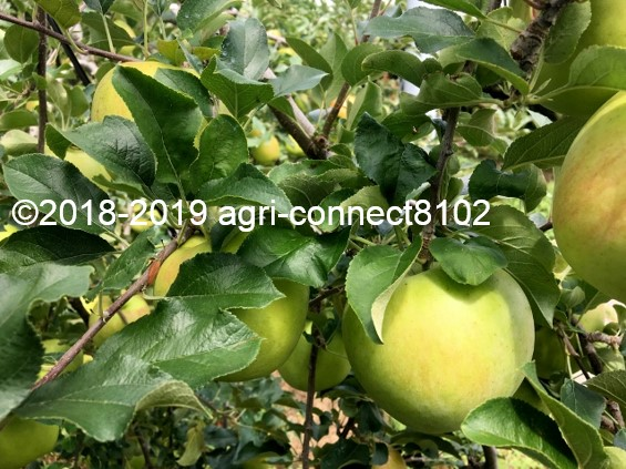 f:id:agri-connect:20190910215842j:plain