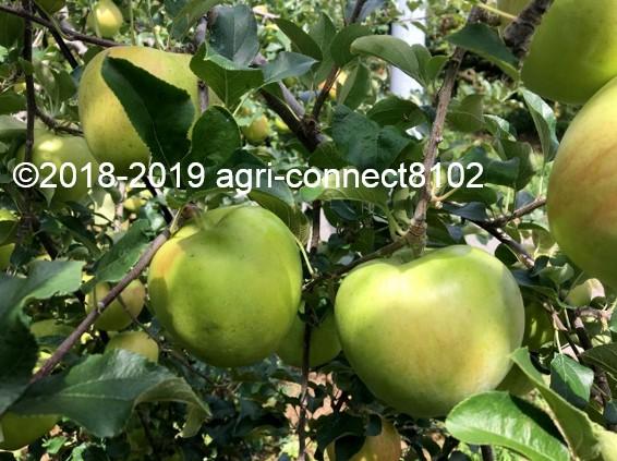 f:id:agri-connect:20190910215851j:plain