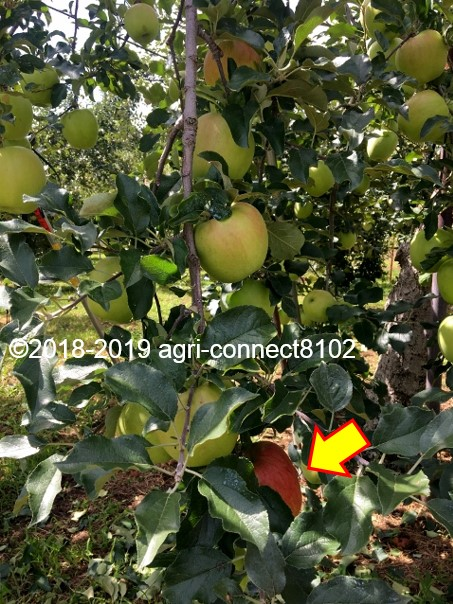 f:id:agri-connect:20190910220339j:plain