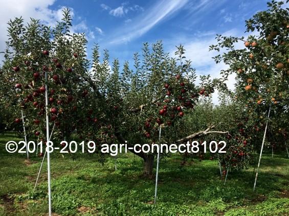 f:id:agri-connect:20191007220350j:plain