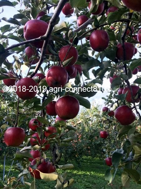 f:id:agri-connect:20191007220401j:plain