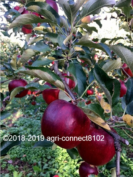 f:id:agri-connect:20191007220410j:plain