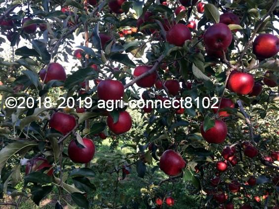 f:id:agri-connect:20191007220419j:plain