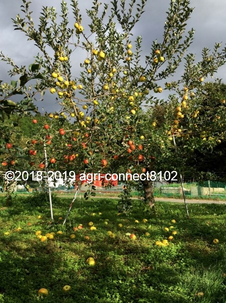 f:id:agri-connect:20191014225253j:plain