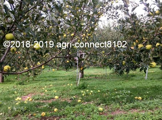 f:id:agri-connect:20191014225306j:plain