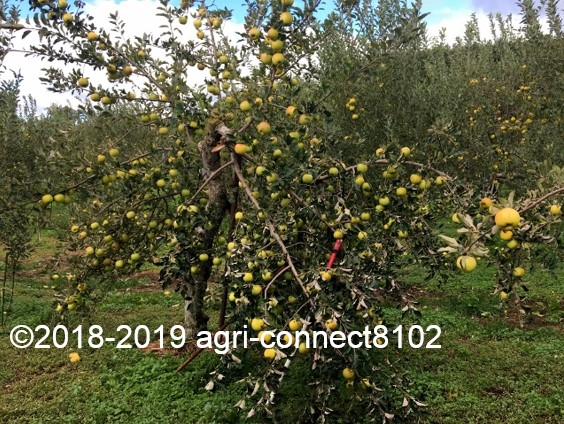 f:id:agri-connect:20191014225314j:plain