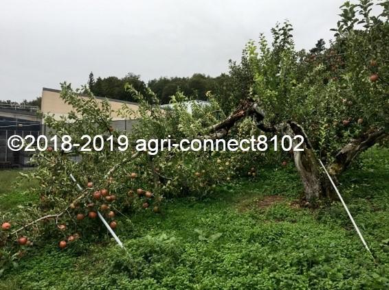 f:id:agri-connect:20191014225325j:plain