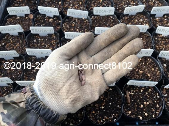 f:id:agri-connect:20191019215509j:plain