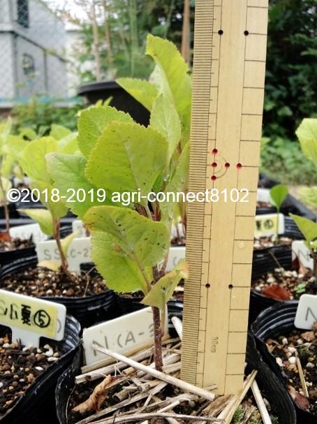 f:id:agri-connect:20191020212053j:plain