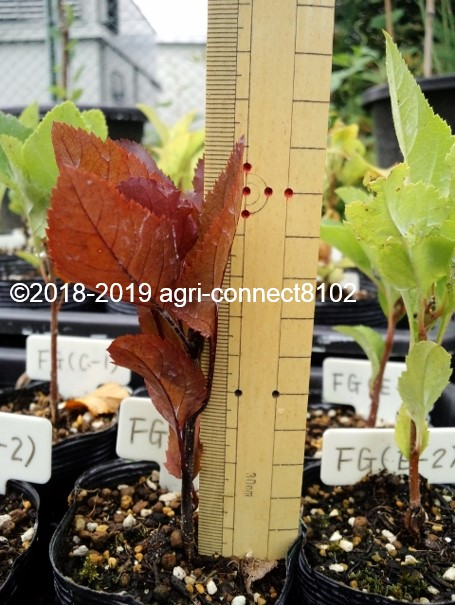 f:id:agri-connect:20191020212644j:plain