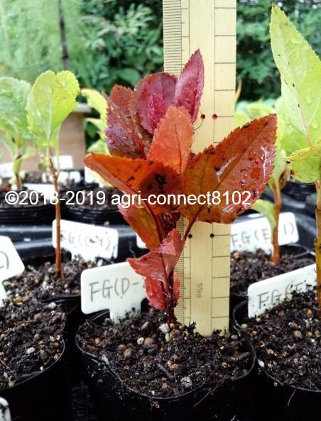 f:id:agri-connect:20191020212655j:plain