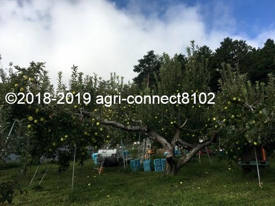 f:id:agri-connect:20191107204520j:plain